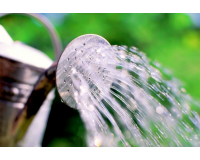 Benefits of Green Water Filters in the Home and Garden