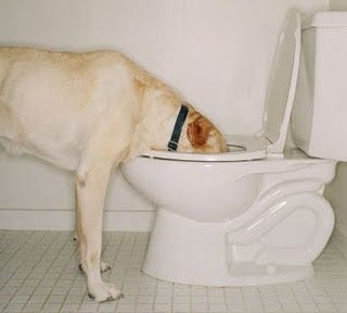 Dog-Drinking-Toilet.jpg
